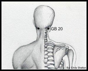muscular back- head GB 20